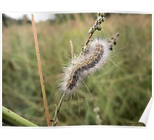Hairy Caterpillar on a Twig Poster
