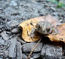 Toad on a Leaf in the Forest by Barberelli