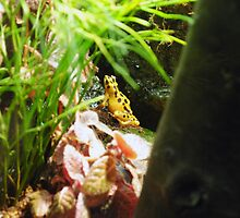 Yellow Frog by lroof