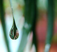 Rain Drippings by LadyEloise