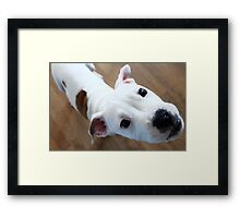 Who Did?!!! Framed Print