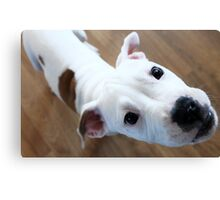 Who Did?!!! Canvas Print