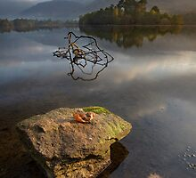 Autumn At Grasmere by SteveMG