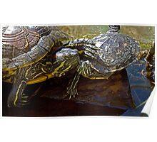 Love Among Turtles Poster