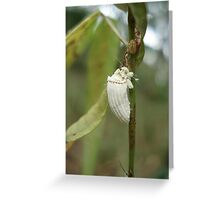COTTONY CUSHION SCALE INSECT  Greeting Card