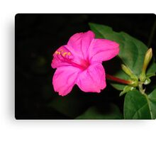 FOUR O'CLOCK (HOT PINK) Canvas Print