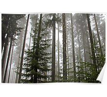 Foggy Forest Morning - Willamette National Forest Poster