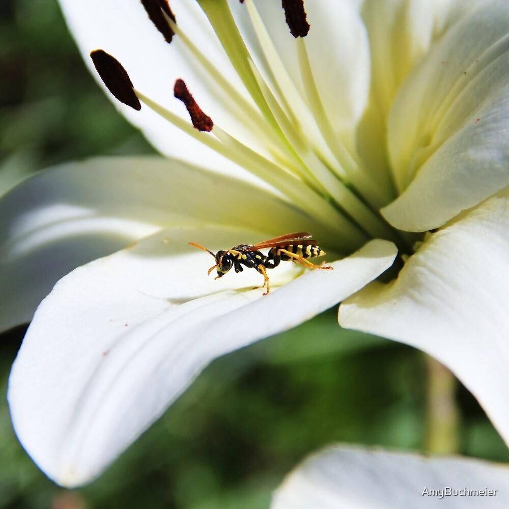 Resting Wasp by AmyBuchmeier