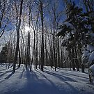 Winter Beauty by Karol Livote