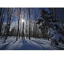 Winter Beauty Photographic Print