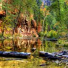 Fall Into The Creek by Diana Graves Photography