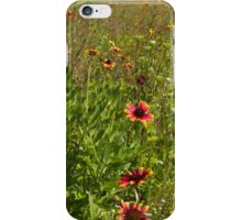 Wildflowers - A swathe of joyous color  iPhone Case/Skin