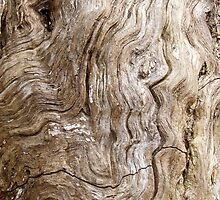 Stripped Bark by Justin  McGovern