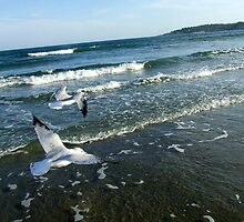 Seagulls In Flight by Justin  McGovern