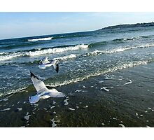 Seagulls In Flight Photographic Print