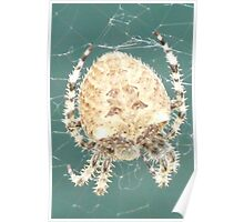 Oscar,The Garbage Can Spider. Poster