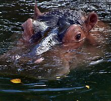 The Mighty Swimming Hippo by Aaron Alviano