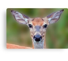 White-tailed Deer Close-up Canvas Print
