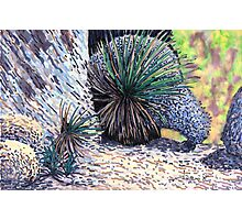c10-Desert Spoons with Boulders Photographic Print