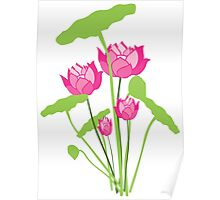 Pink color water lily flower Poster