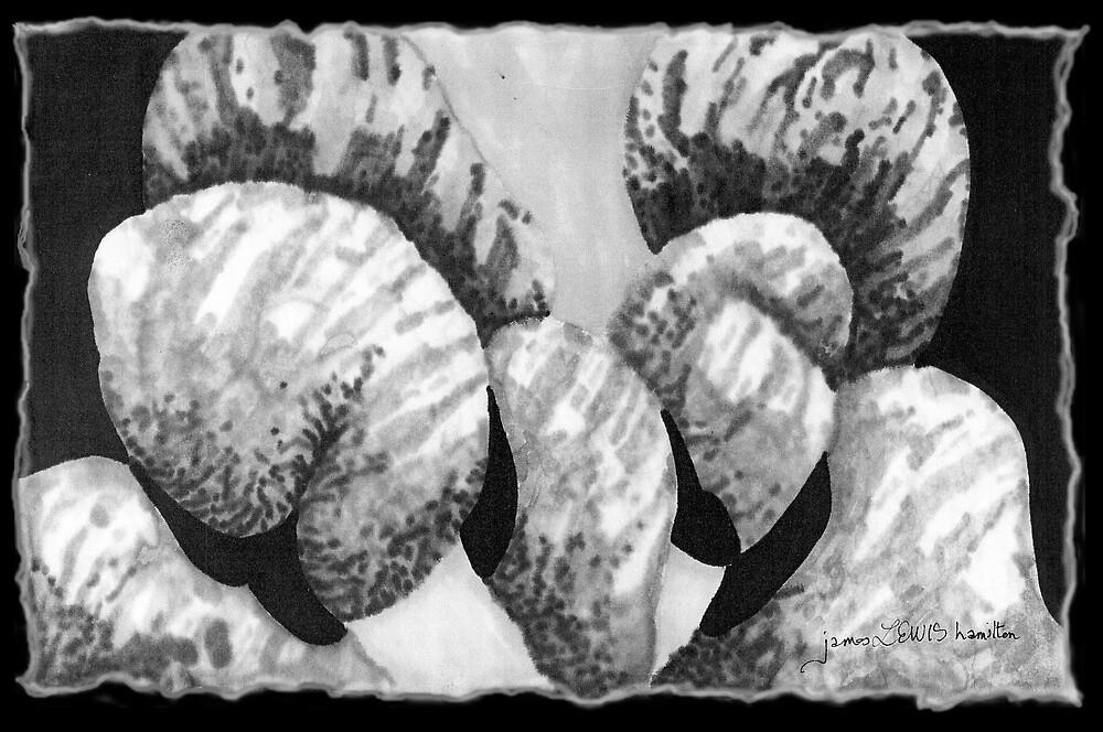 Butt Boulders by James Lewis Hamilton