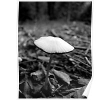 Mushroom - Dunbar Cave Natural Area Poster