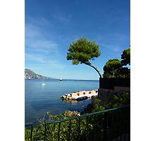 Mediterannean Pine Photographic Print