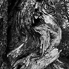 Aged Smokey Mountain Cedar by Sam Warner