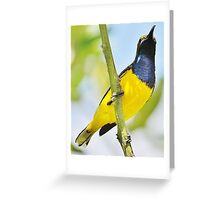 Honey eater bird Greeting Card