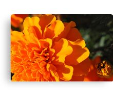 Mary....gold! Canvas Print