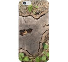 Top view of an old stump of cut tree cracked and rotten core iPhone Case/Skin