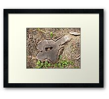 Top view of an old stump of cut tree cracked and rotten core Framed Print