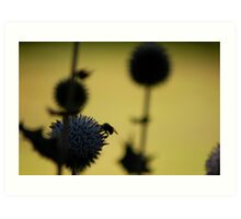 Bees gathering in silhouette Art Print