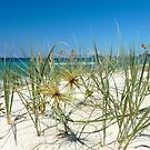 Spinifex on the dunes by NaturalCultural