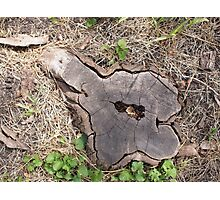 Overhead view of an old stump of cut tree Photographic Print