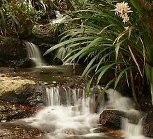 Mountain stream - Springbrook N.P, Queensland. by Ian Hallmond