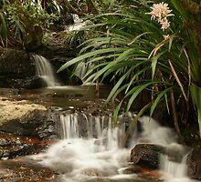 Mountain stream - Springbrook N.P, Queensland. by Ian Hallmond