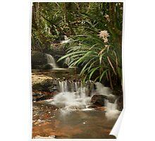 Mountain stream - Springbrook N.P, Queensland. Poster
