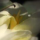 Quiet Dreams by Lozzar Flowers & Art