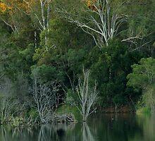 Lake Samsonvale, Queensland. by Ian Hallmond