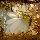 Hiding Place by Lozzar Flowers & Art