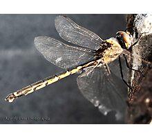 Dragonfly on Bondi Beach Photographic Print