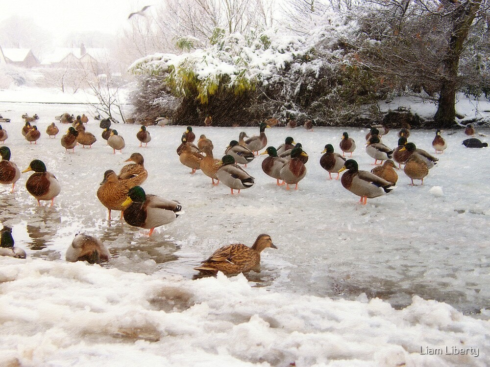 Ducks on a Frozen Lake by Liam Liberty