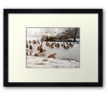 Ducks on a Frozen Lake Framed Print