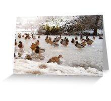 Ducks on a Frozen Lake Greeting Card