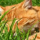 Asleep in Sunshine by Blackpig