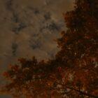 Glow by TophuPhoto