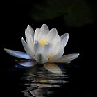 Waterlily by RosiLorz