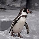 Walking Penguin by Vac1