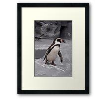 Walking Penguin Framed Print